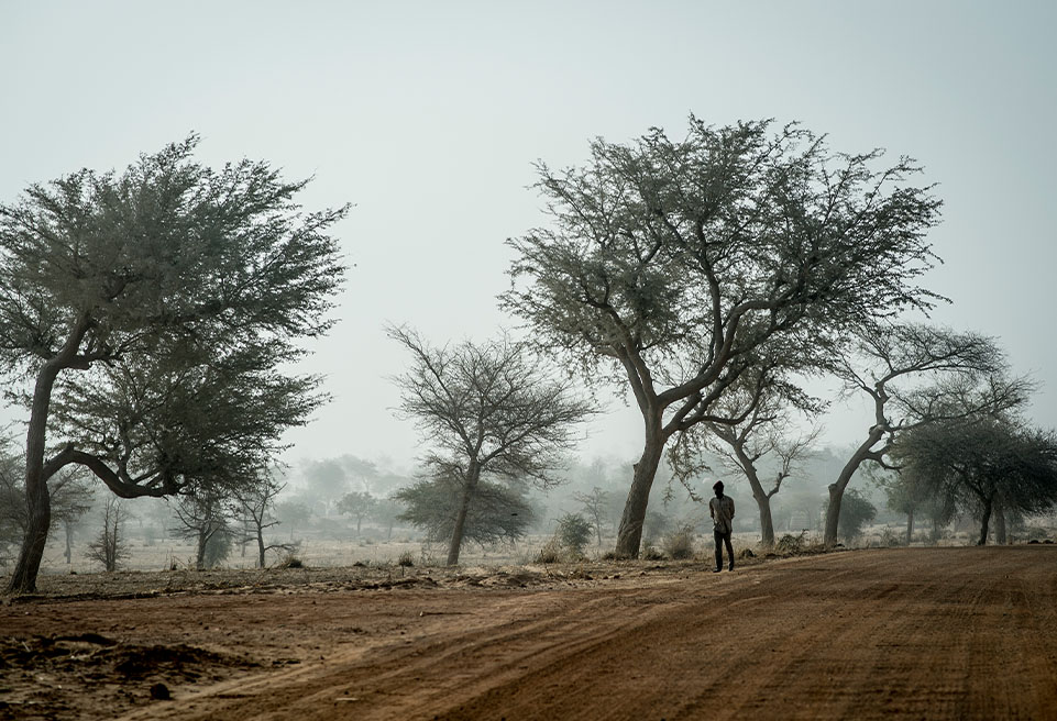 Niger, district de Mirriah